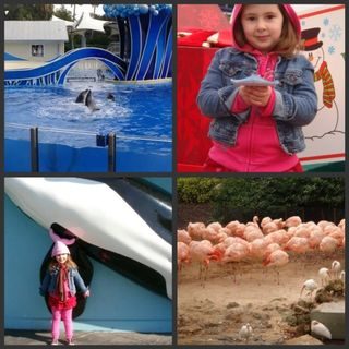 Seaworld collage